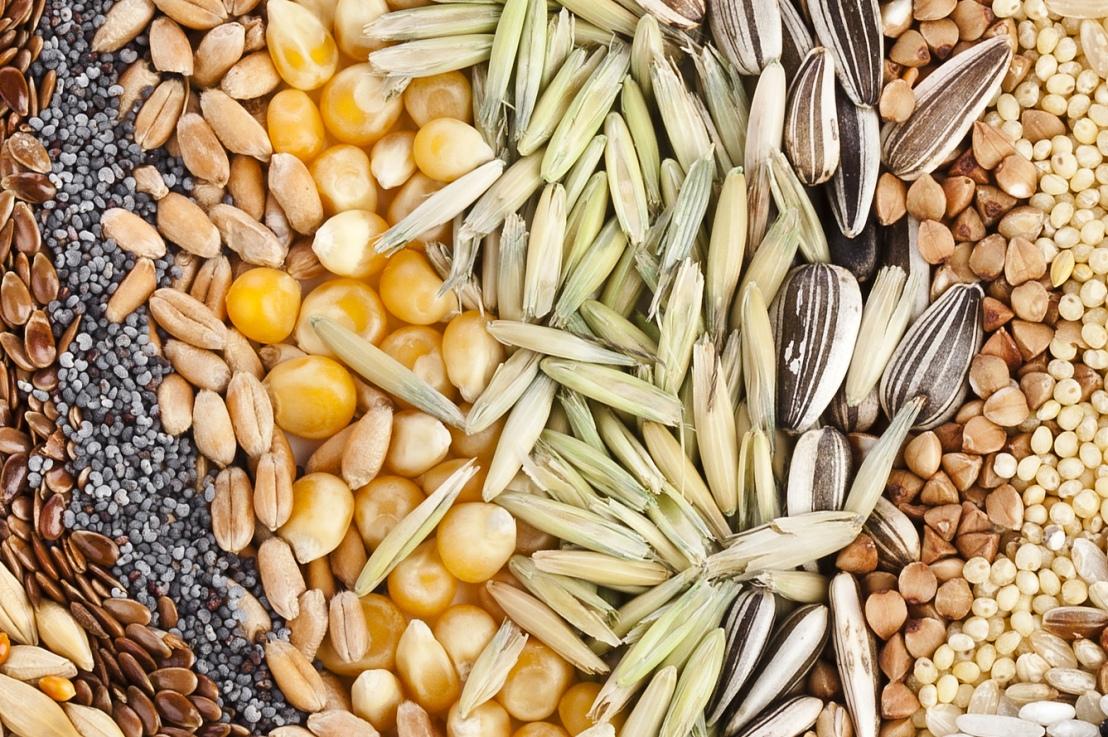 Preţul seminţelor româneşti îl va depăşi pe cel alaurului!